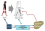 biomechanik:aktuelle_themen:projekte_ss15:biped_model.png