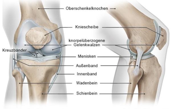 https://www.gesundheitsinformation.de/wie-funktioniert-das-knie.html