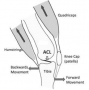biomechanik:aktuelle_themen:projekte_ss21:abbildung2_vorschub_tibia.png