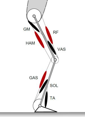 MUS5 Muskel-Skelett [Institut für Sportwissenschaft]