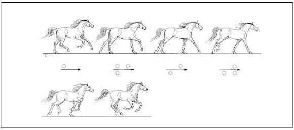 zunge pferd anatomie