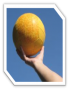 biomechanik:projekte:ss2012:icon_wurf.png