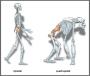 biomechanik:projekte:ss2013:bipedal.png