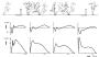 biomechanik:projekte:ss2014:horzontale_u-_vertikale_geschwindigkeitsverlauf.png