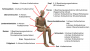 biomechanik:projekte:ss2016:sensor_dummy_bild.png