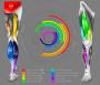 biomechanik:projekte:ss2020:abb_8_-_muskulaere_anteile_an_der_rotationsbewegung_der_fahrradpedale._.png