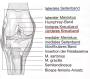 biomechanik:projekte:ss2020:kniegelenk_.png