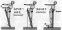 biomechanik:projekte:ws2012:foto_3back.png