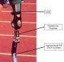 biomechanik:projekte:ws2012:wikibild-mo.png