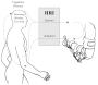 biomechanik:projekte:ws2016:hri.png